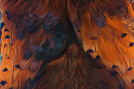 Pheasabou Hot Orange 1000vliegen.nl