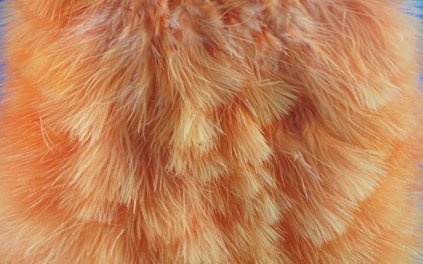 Chickabou Patch Sunburst 1000vliegen.nl