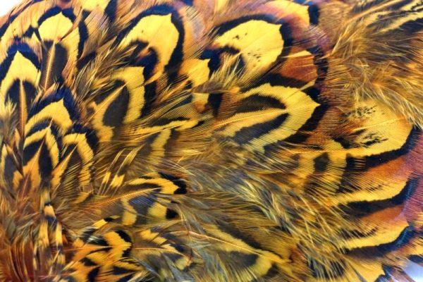 cock-pheasant-shoulder-patch-sunburst-natte vliegen-chevron-vliegbinden-venlo