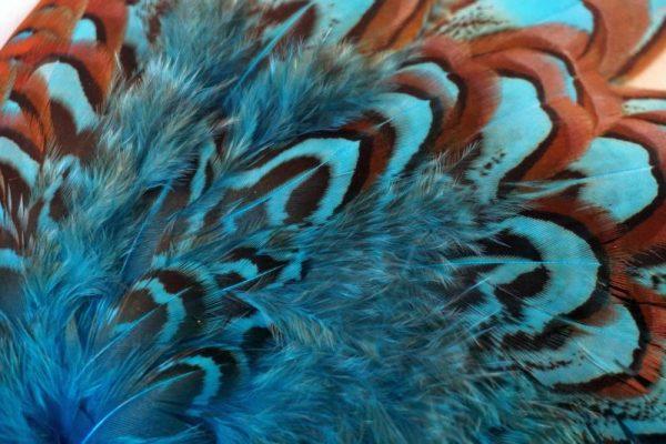cock-pheasant-shoulder-patch-kingfisher blue-chevron-natte vliegen-vliegbinden-venlo