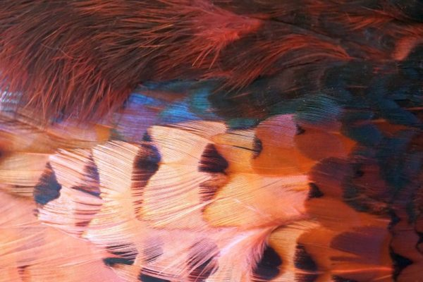 pheasabou/pink/fazant/chevron/vliegbinden/venlo