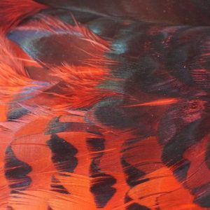 Pheasabou-red -vliegbinden-chevron-fazant-venlo