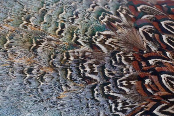 cock-pheasant-rump-patch-natural-fibers-hackles-chevron-vliegbinden-venlo