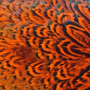 cock-pheasant-rump-patch-hot orange-fibers-hackles-chevron-vliegbinden-venlo