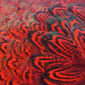 cock-pheasant-rump-patch-red-fibers-hackles-chevron-vliegbinden-venlo