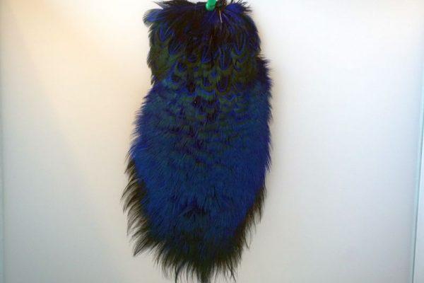 cock-pheasant-rump-patch-royal-blue-fibers-hackles-chevron-vliegbinden-venlo