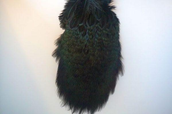 cock-pheasant-rump-patch-black-fibers-hackles-chevron-vliegbinden-venlo