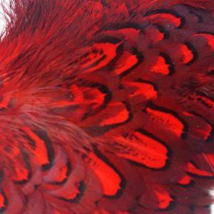 cock-pheasant-shoulder-patch-red-chevron-vliegbinden-fazant-natte vliegen-venlo