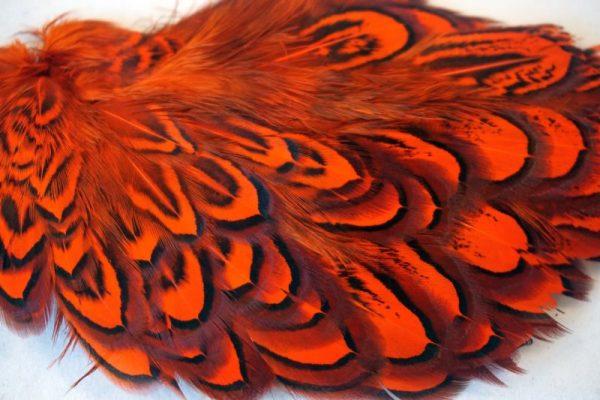 cock-pheasant-shoulder-patch-hot orange-chevron-natte vliegen-vliegbinden-venlo