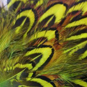 cock-pheasant-shoulder-patch-chartreuse-natte-vliegen-vliegbinden-chevron-venlo