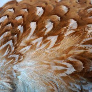 cock-pheasant-shoulder-patch-bleached-gebleekt-chevron-natte-vliegen-vliegbinden-venlo