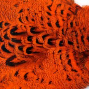 pheasant-neck-hen-cape-hot-orange-chevron-vliegbinden-venlo/natte vliegen/nymphen