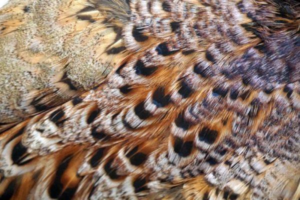 pheasant-neck-hen-cape-natural-brown-chevron-vliegbinden-venlo/natte vliegen/nymphen