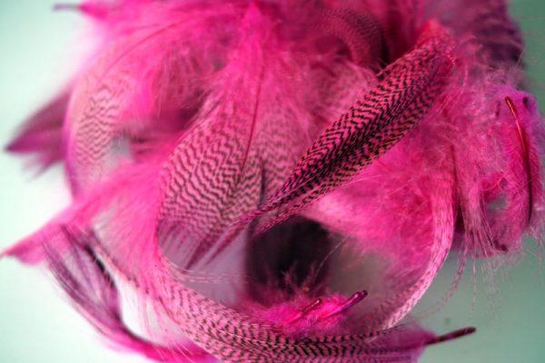 mallard-flankveren-natte vliegen-droge vliegen-vliegbinden-wilde eend-Chevron-hot pink-venlo