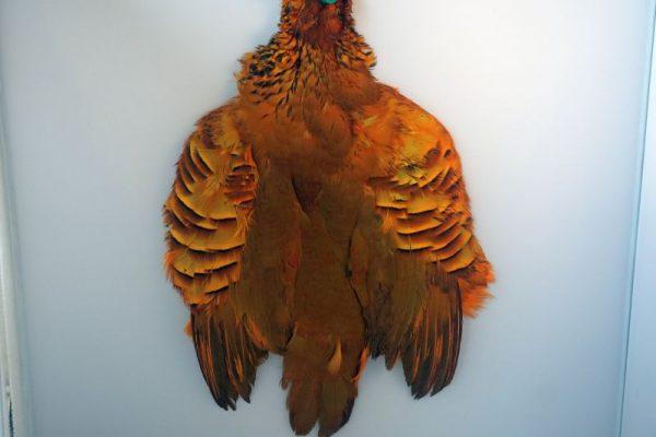 patrijs-french partridge-streamers-marabou-skin-sunburst-meivliegen-hackles-vliegbinden-venlo-rode patrijs