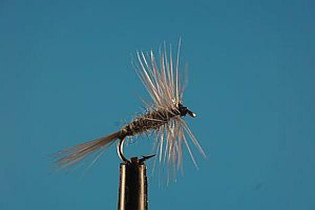 Grey Midge S 1000vliegen