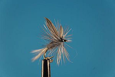 Blue Dun S 1000vliegen