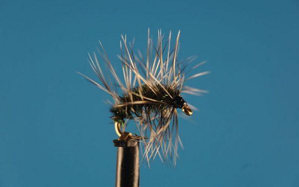 Humphreys Cress Bug L 1000vliegen