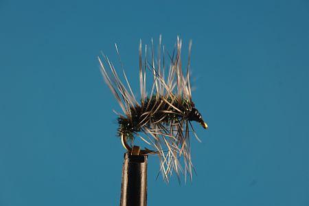 Humphreys Cress Bug S 1000vliegen