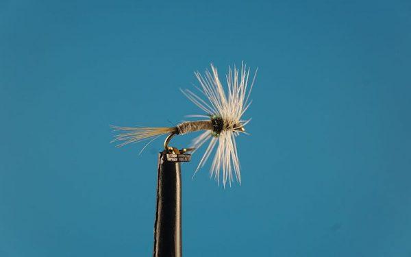 Caenis L 1000vliegen