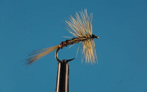 Spring Olive Spider L 1000vliegen