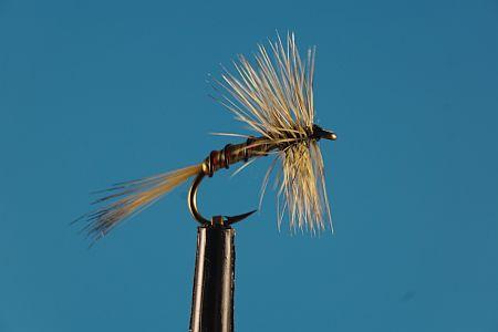 Spring Olive Spider S 1000vliegen