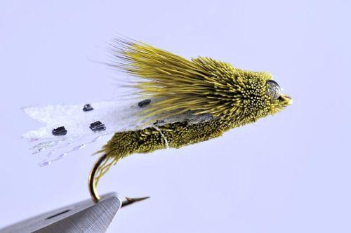 1000vliegen.nl, karper, kopvoorn, Cicade, cicade green, venlo,vliegvissen, vliegvisser, rivier, reservoir, wf lijn, leader, tippet