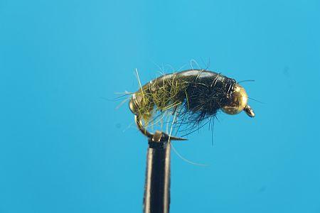Shrimp Olive 1000vliegen.nl