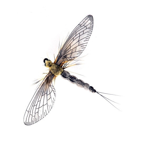 1000vliegen-nl-mayfly spent kaki grey,-forel-forellenvijver-natuurgetrouw-realistic-fly-realistische-vlieg-regenboog-forel-rivier-spent-kaki-light-grey-spent-fly-tencamo-t